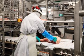 Réduction d'achats du Québec Les Éleveurs de porcs du Québec dénoncent Olymel