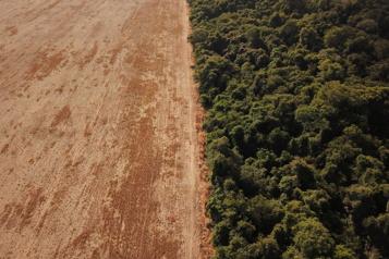 COP26 sur le climat Le Brésil va à Glasgow prêt à défendre ses intérêts en Amazonie