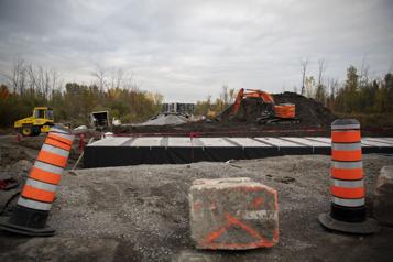 Habitat de la rainette faux-grillon menacé Deux groupes demandent aux tribunaux de stopper les travaux à Longueuil