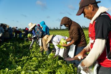 Retard dans le traitement des demandes La prochaine saison agricole en danger