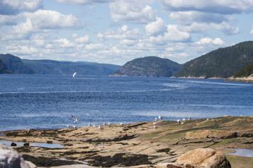 Parc marin du Saguenay–Saint-Laurent Une pêche «destructrice» dans une aire marine protégée